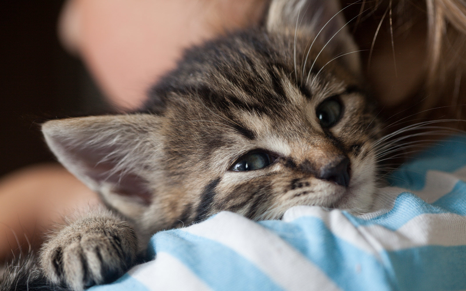 Quit Your Job and Become a Professional Cat Cuddler in Ireland
