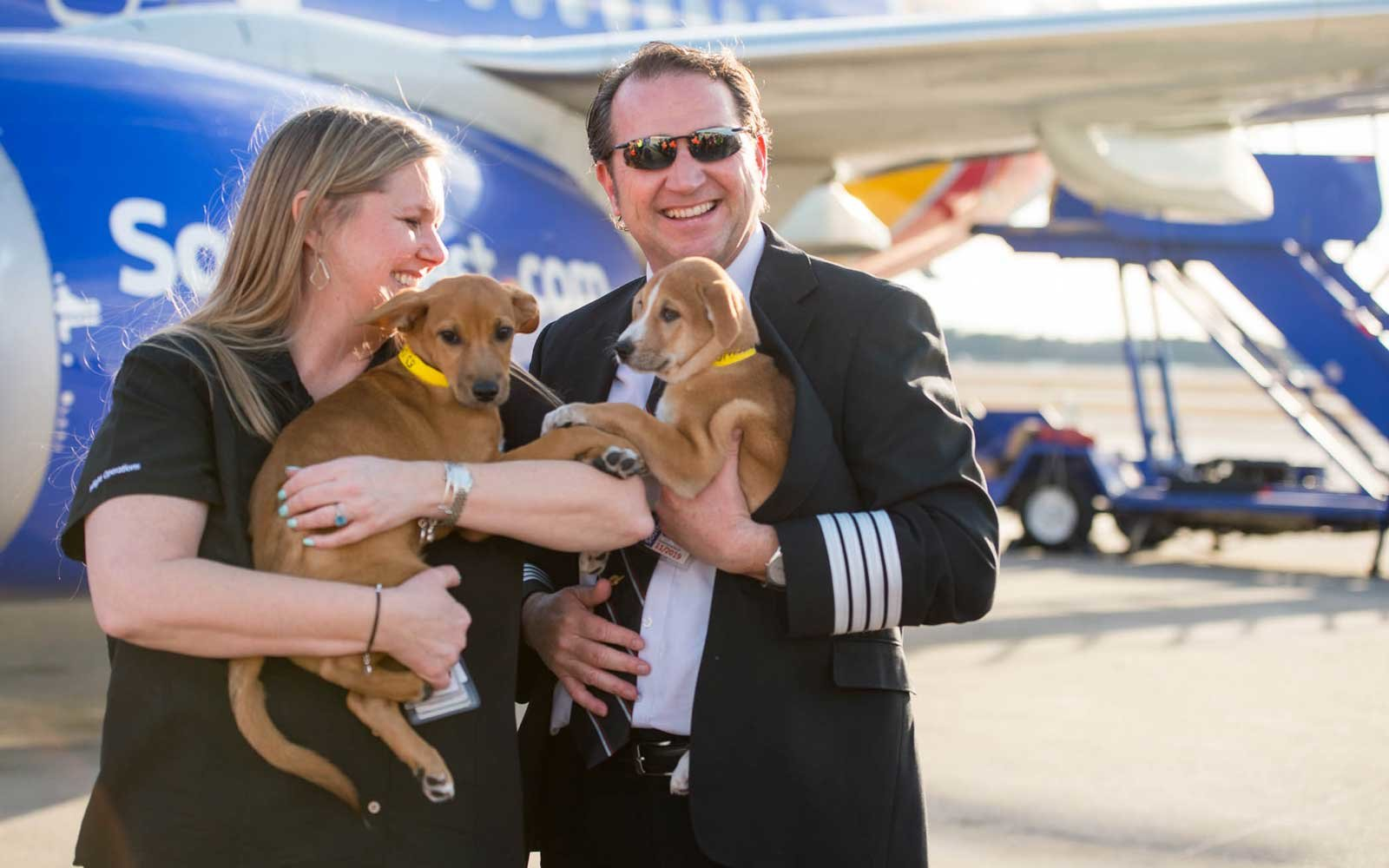 Southwest rescue flight to Puerto Rico to save puppies and kittens