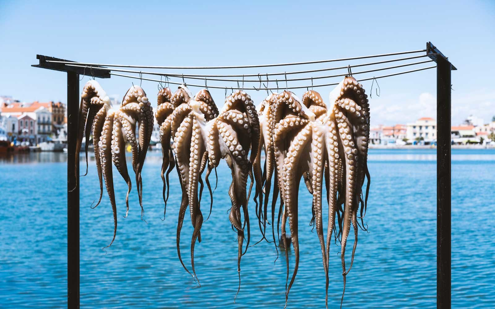 Hanging octopus at a restaurant on Greek island