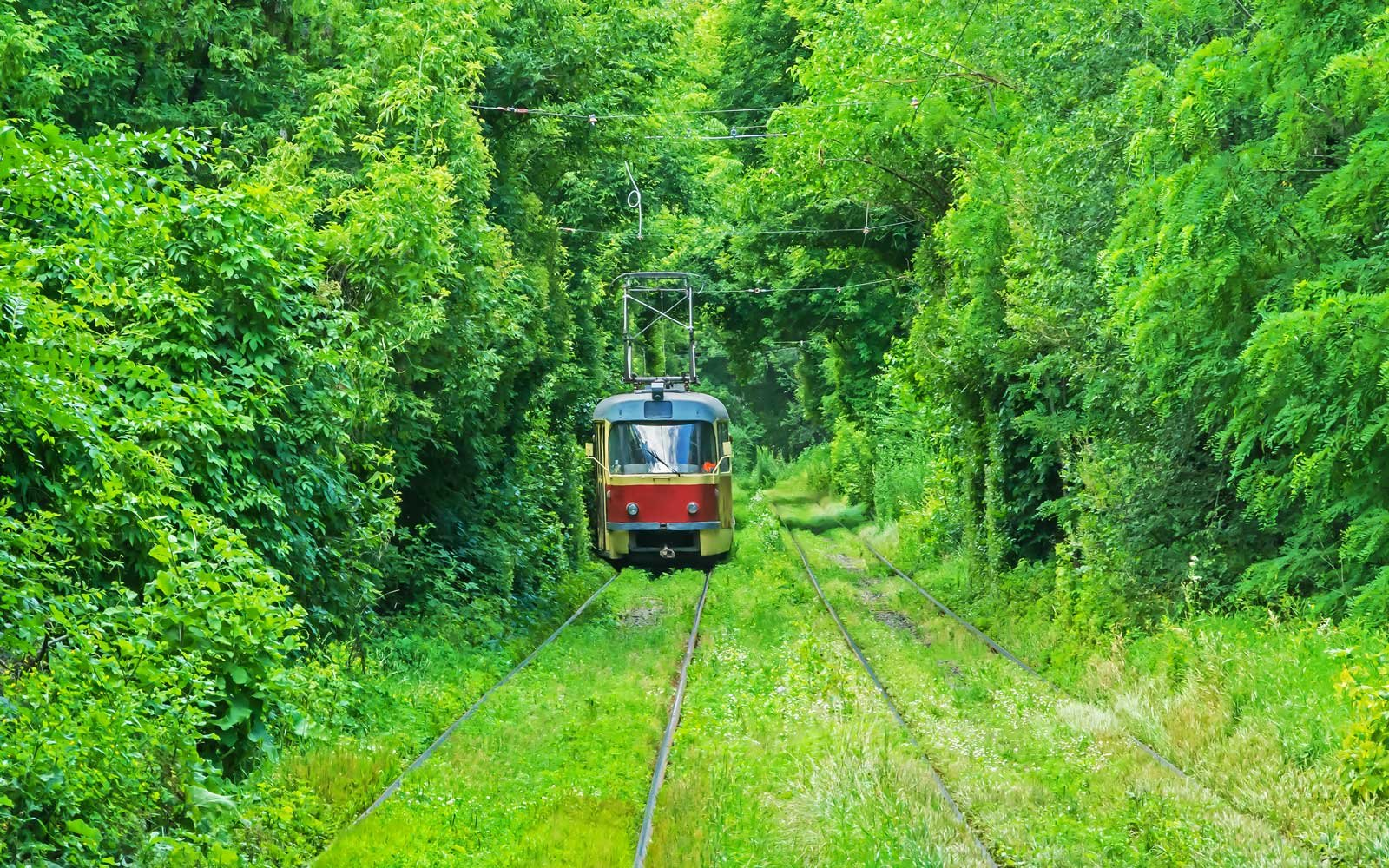 Tram tunnel of love in ukraine