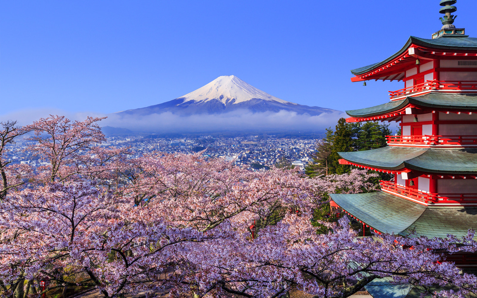 Japan Cherry Blossom Festival 2018: Where and When to Visit | Travel + Leisure