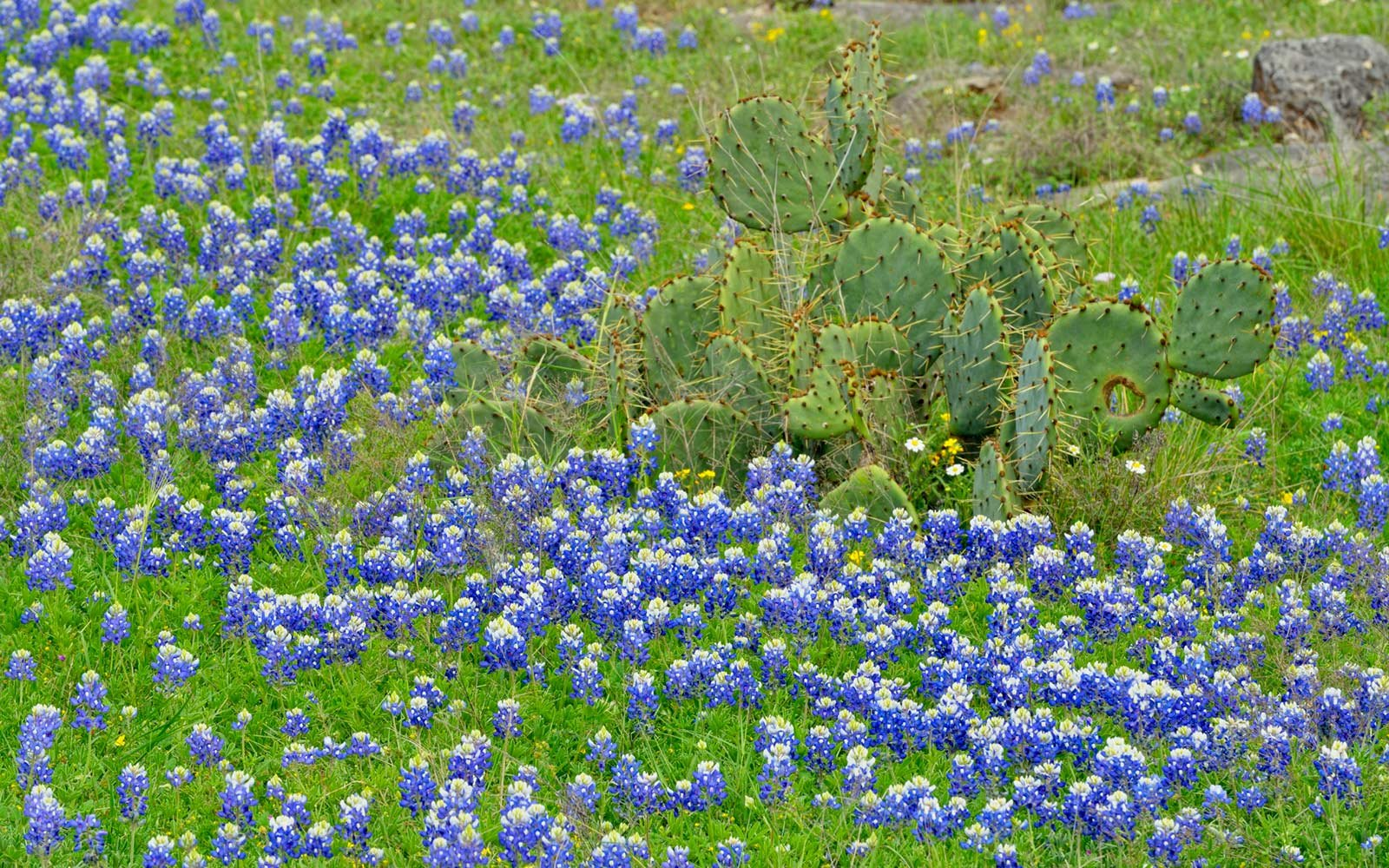 Bluebonnet Festival, Burnet, Texas