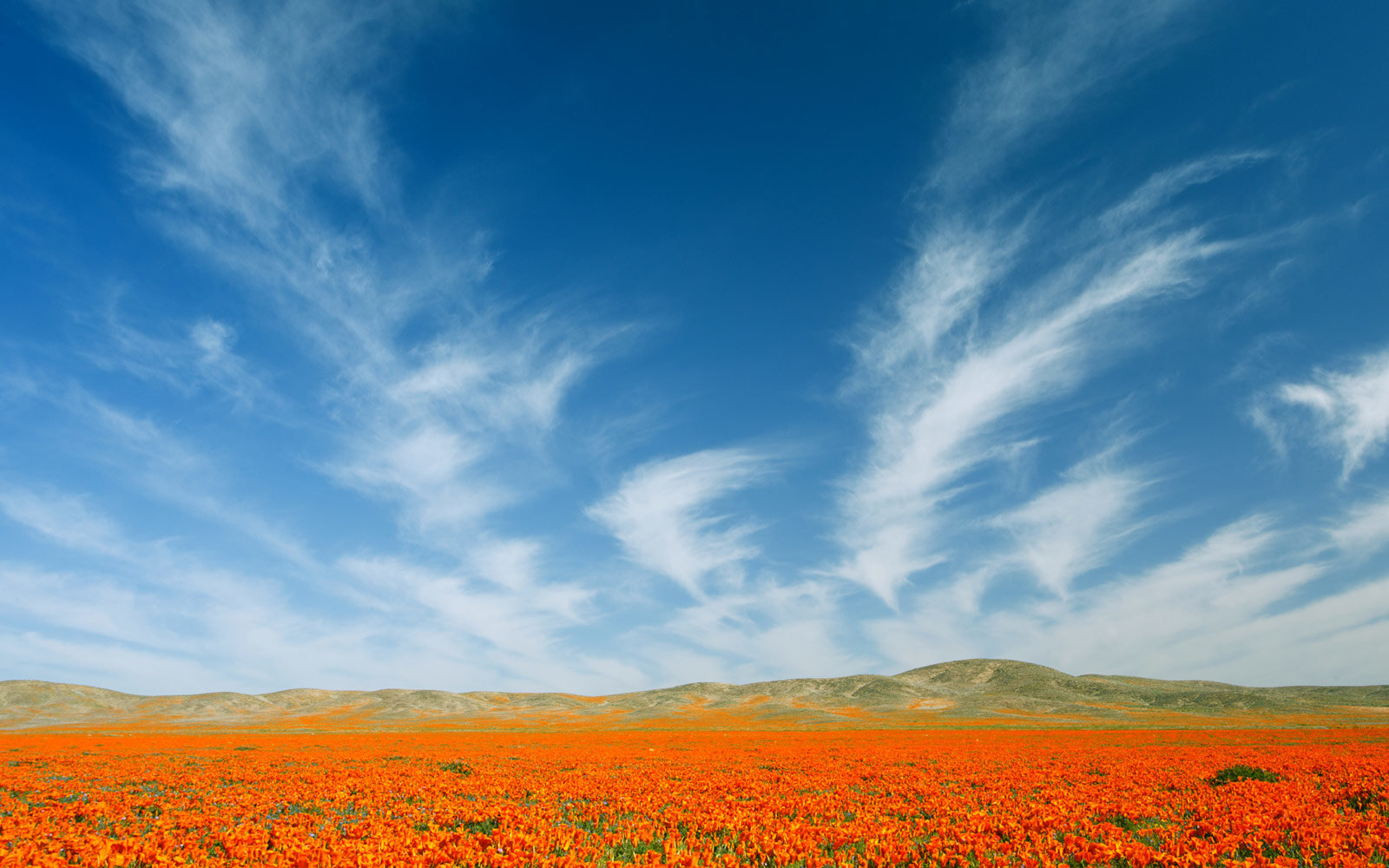 California Poppy Festival in Lancaster, California