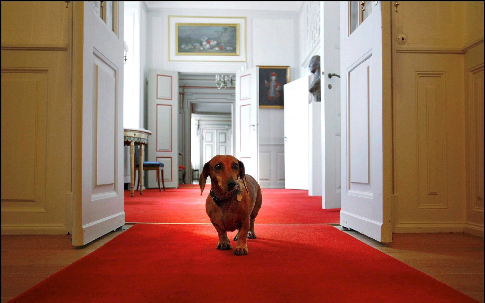 This Museum Dedicated to Dachshunds Just Opened in Germany (Video)