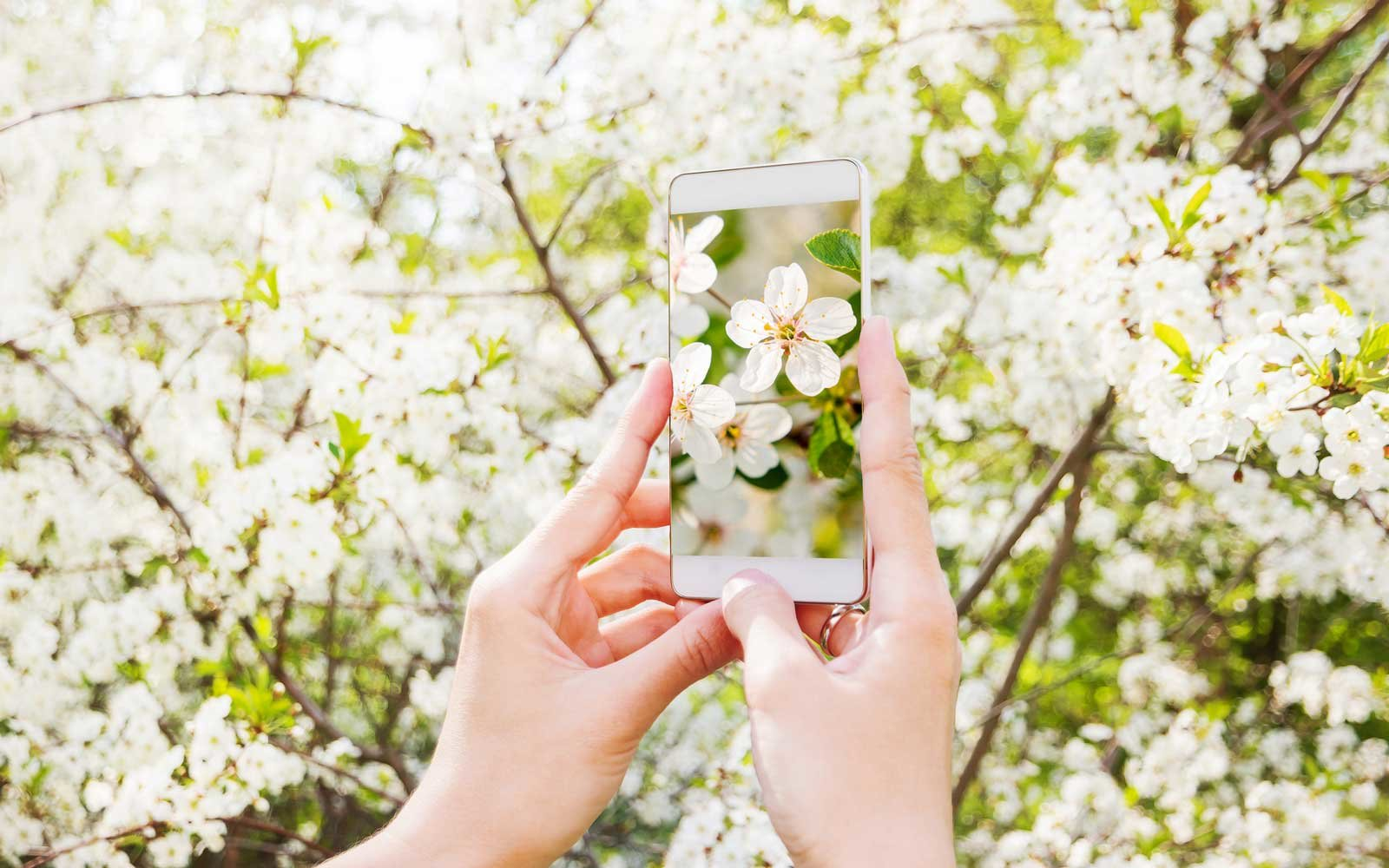 This New App Will Help You Identify the Plants and Animals You See in Nature