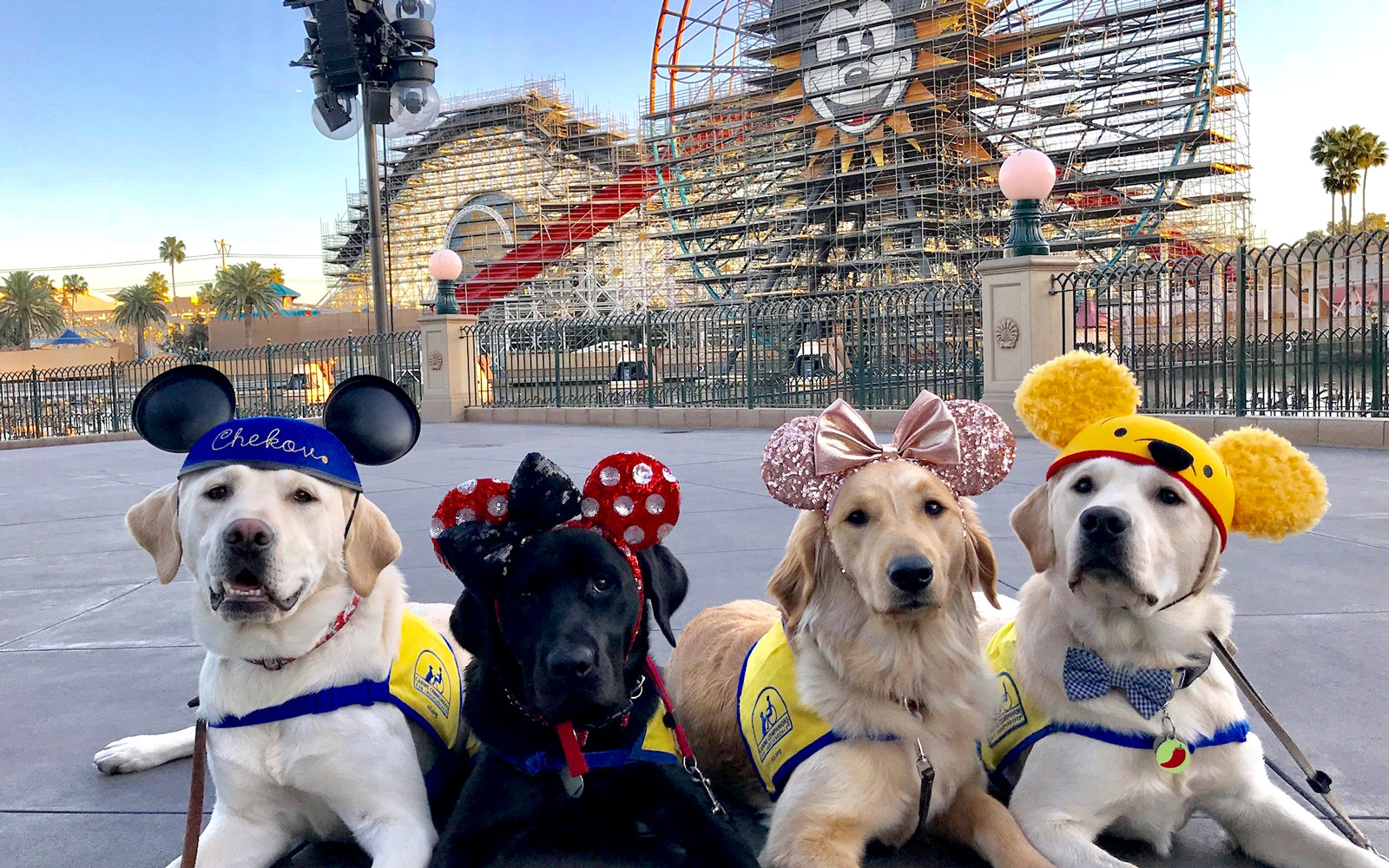 These Service Dogs Spent a Day at Disneyland and the Photos Are Absolutely Magical