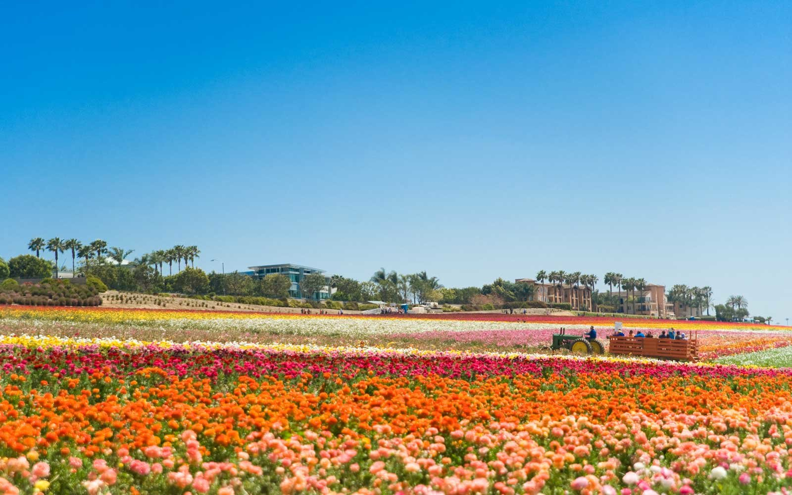 The best places to travel in may travel leisure flower fields carlsbad california izmirmasajfo