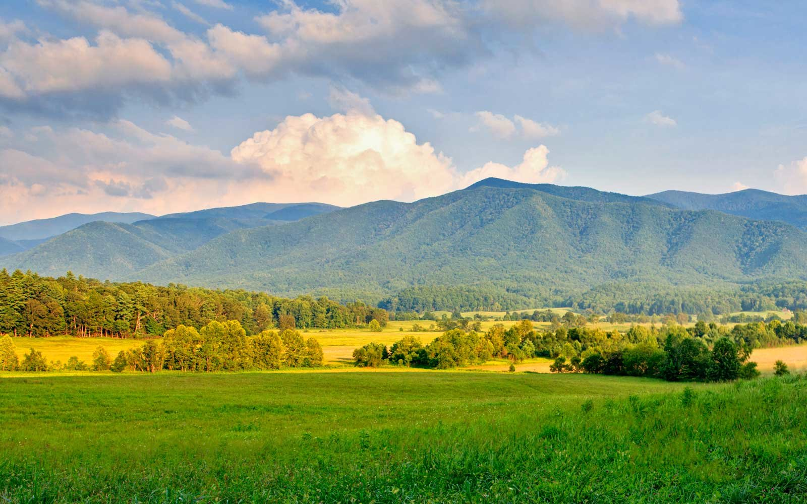 Early evening light in the Cades Cove area of the Smokies.