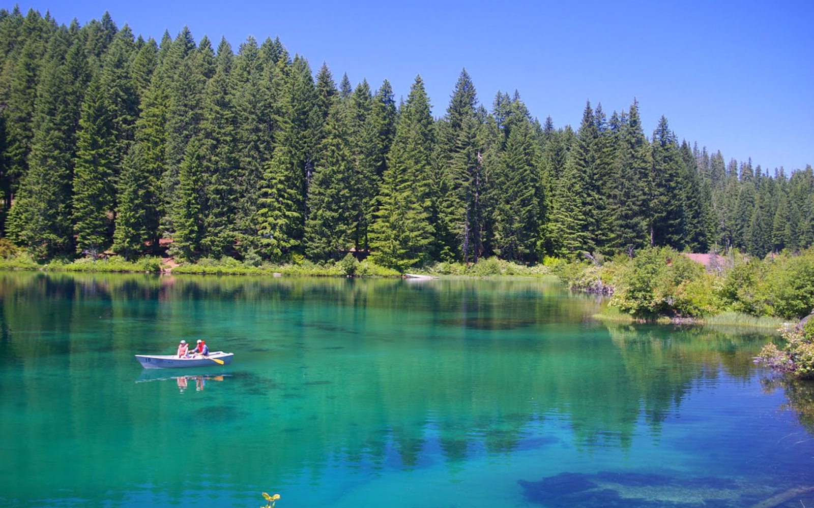 America's Most Beautiful Lake Has A Sunken Forest Beneath