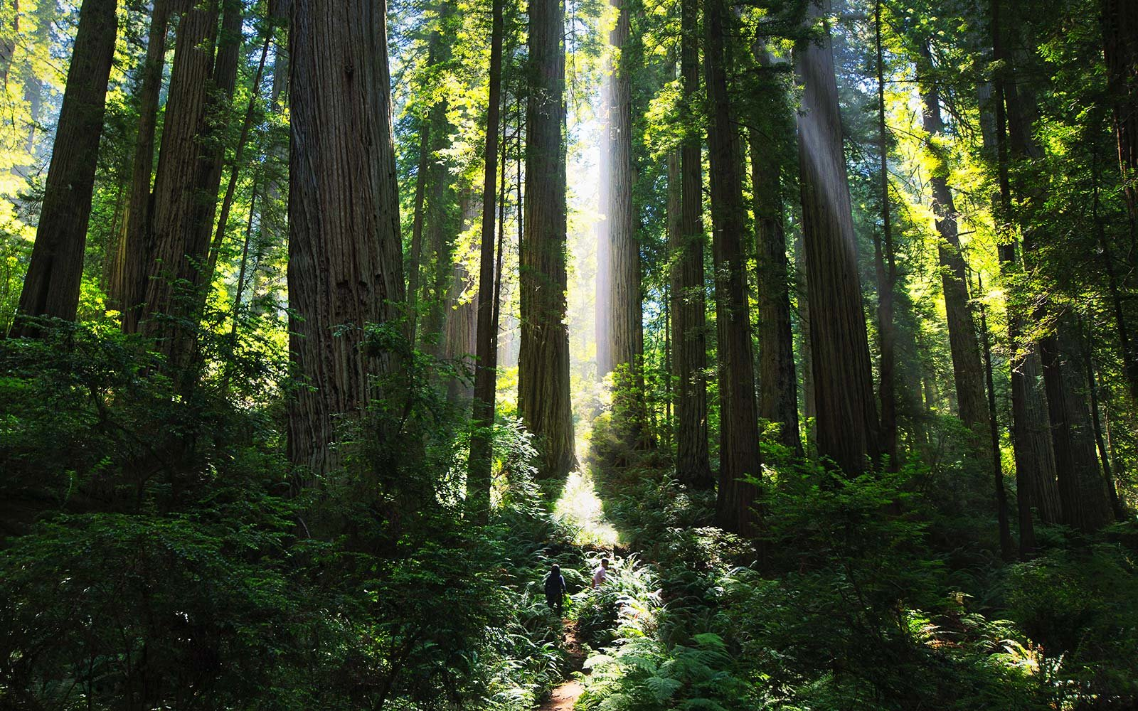 Prairie Creek Redwood State Park California