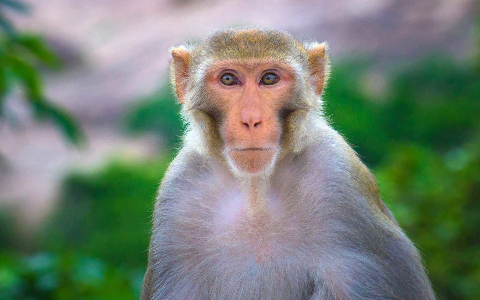 A Monkey Escaped Its Crate And Ran Around The San Antonio