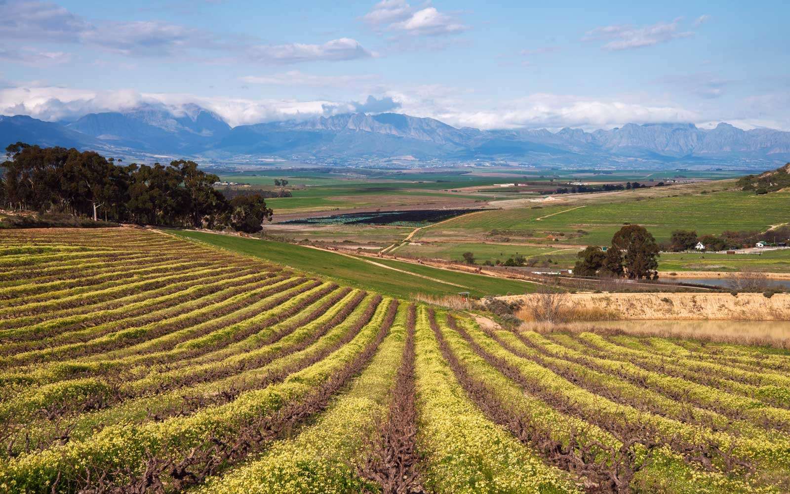 Vineyards in Swartland, South Africa
