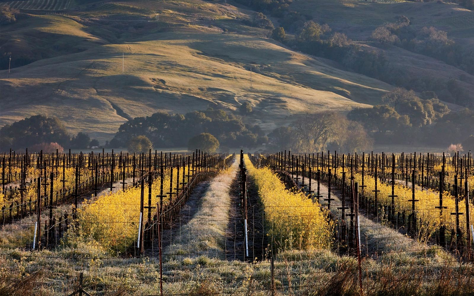 Mendocino County Is A Paradise For Lovers Of Great Food And Top Notch Wines