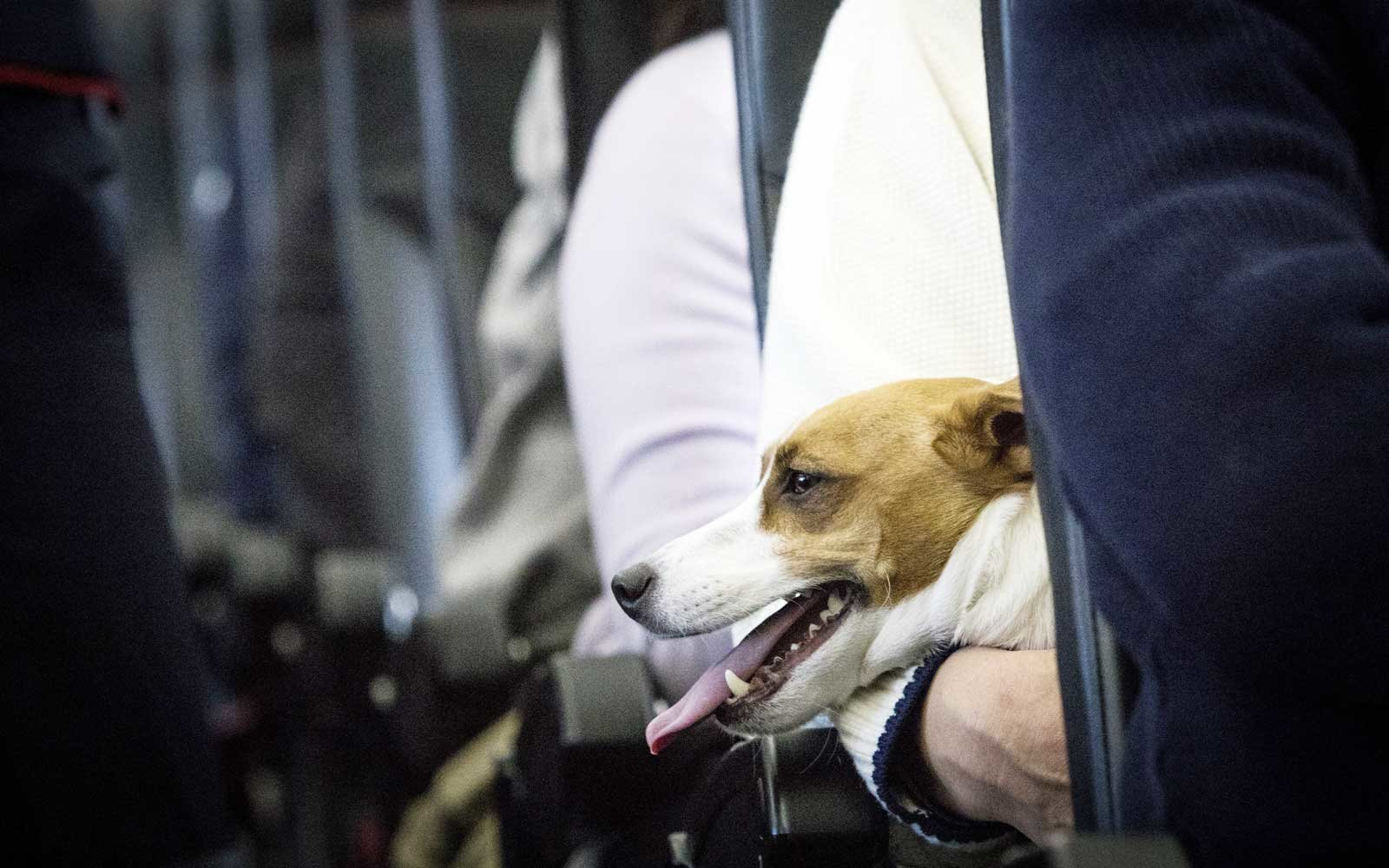 Dogs and their owners allowed to sit together on flight in Japan