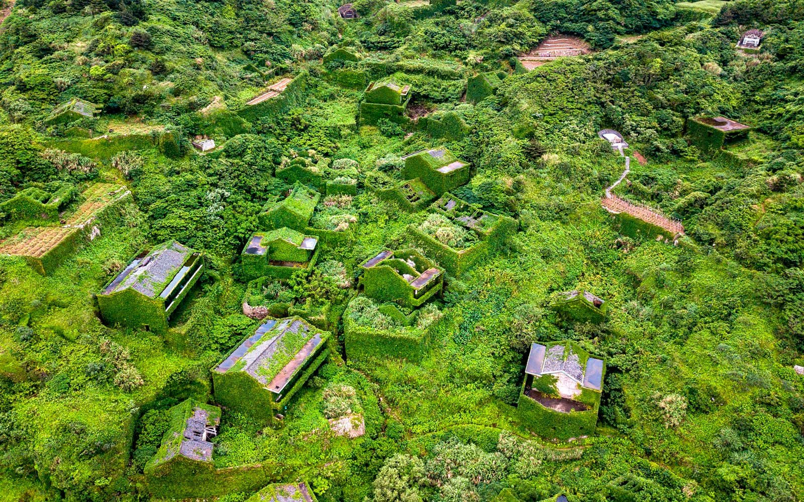 Aerial of overgrown green village in China
