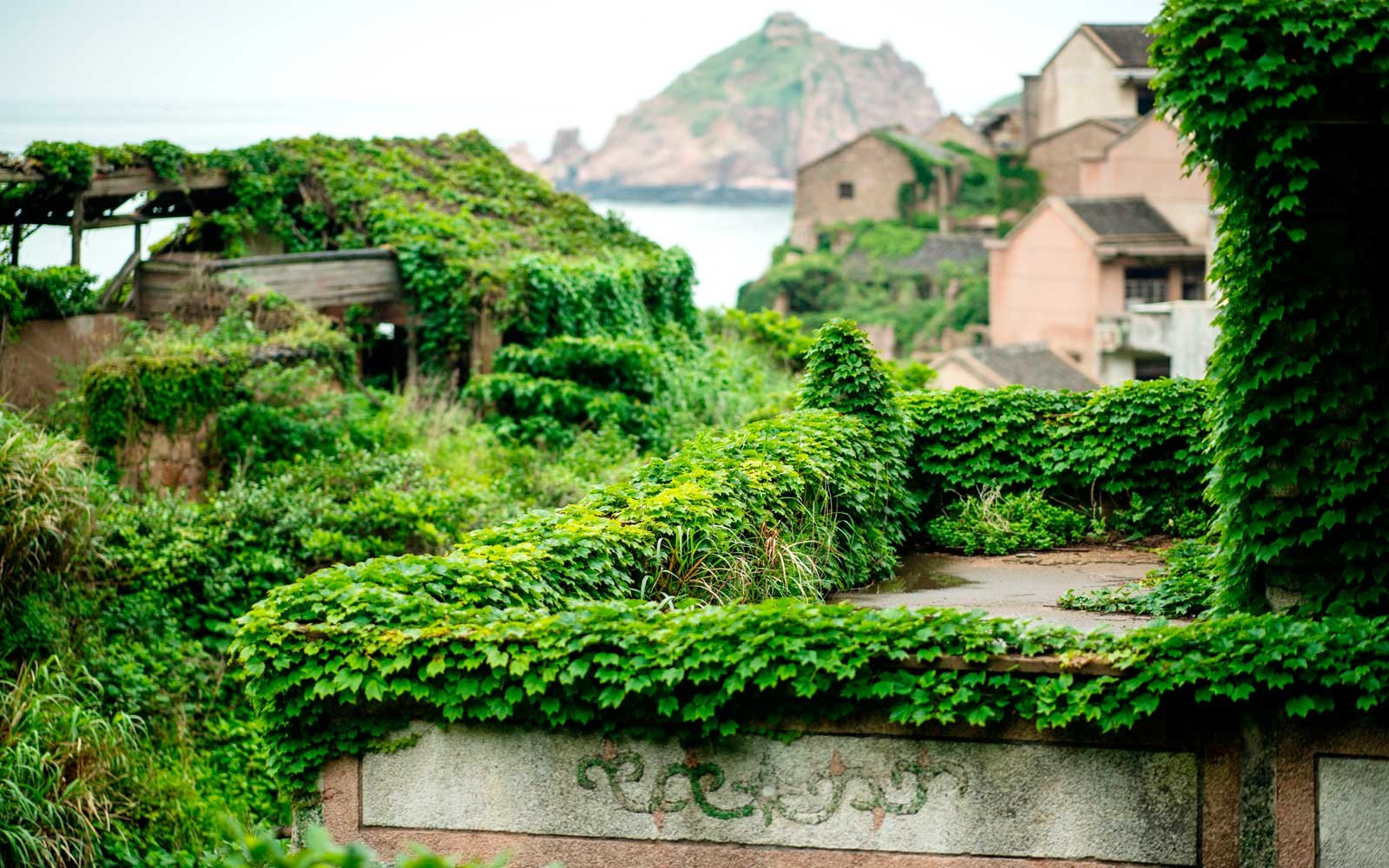 This picture taken on May 31, 2018 shows abandoned village houses covered with overgrown vegetation in Houtouwan on Shengshan island, China