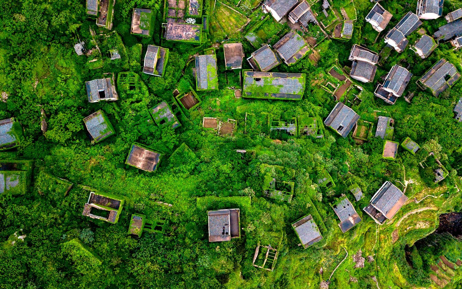 This aerial picture taken on May 31, 2018 shows abandoned village houses covered with overgrown vegetation in Houtouwan on Shengshan island, China