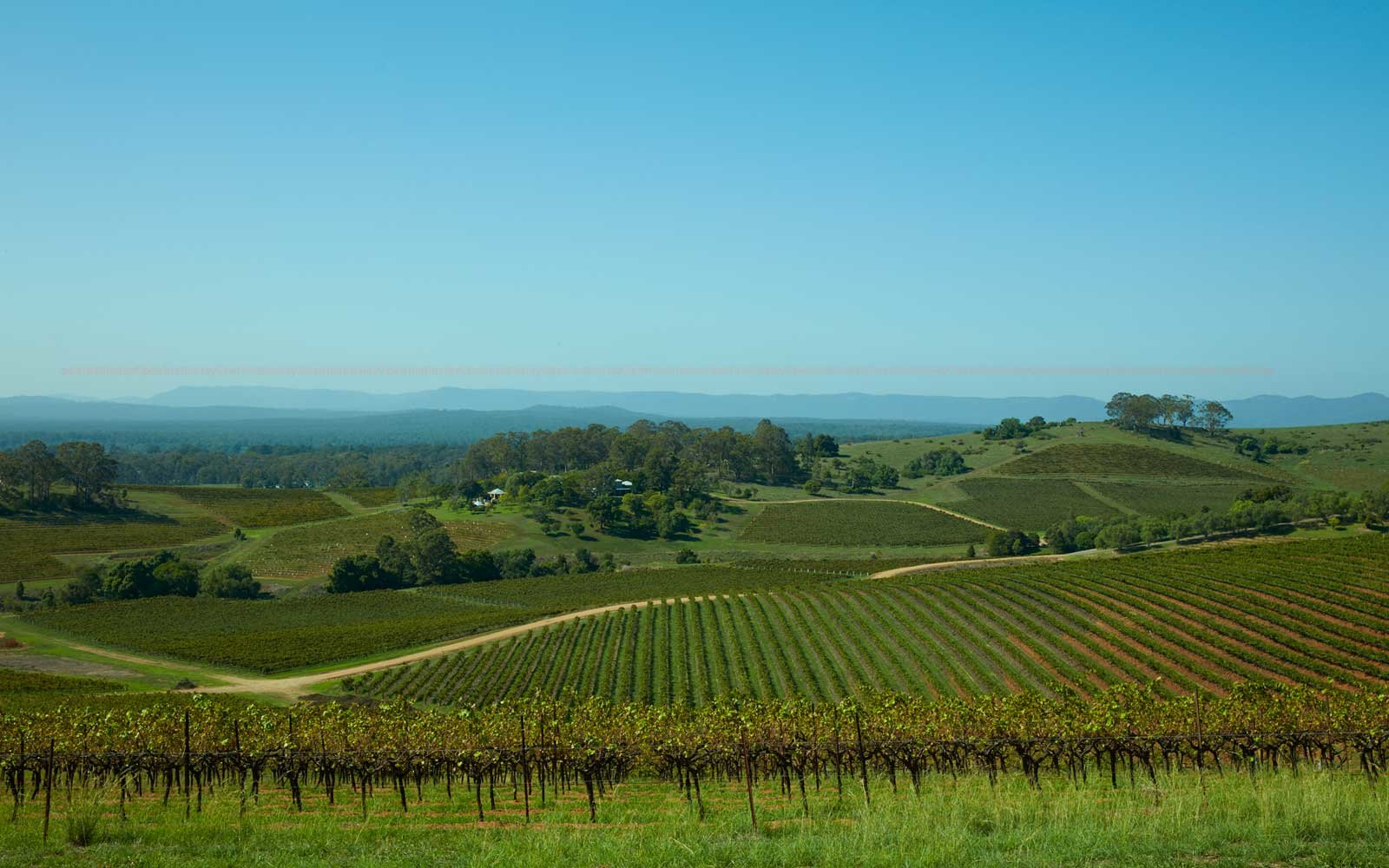 View from Bistro Molines, in Australia's Hunter Valley wine region