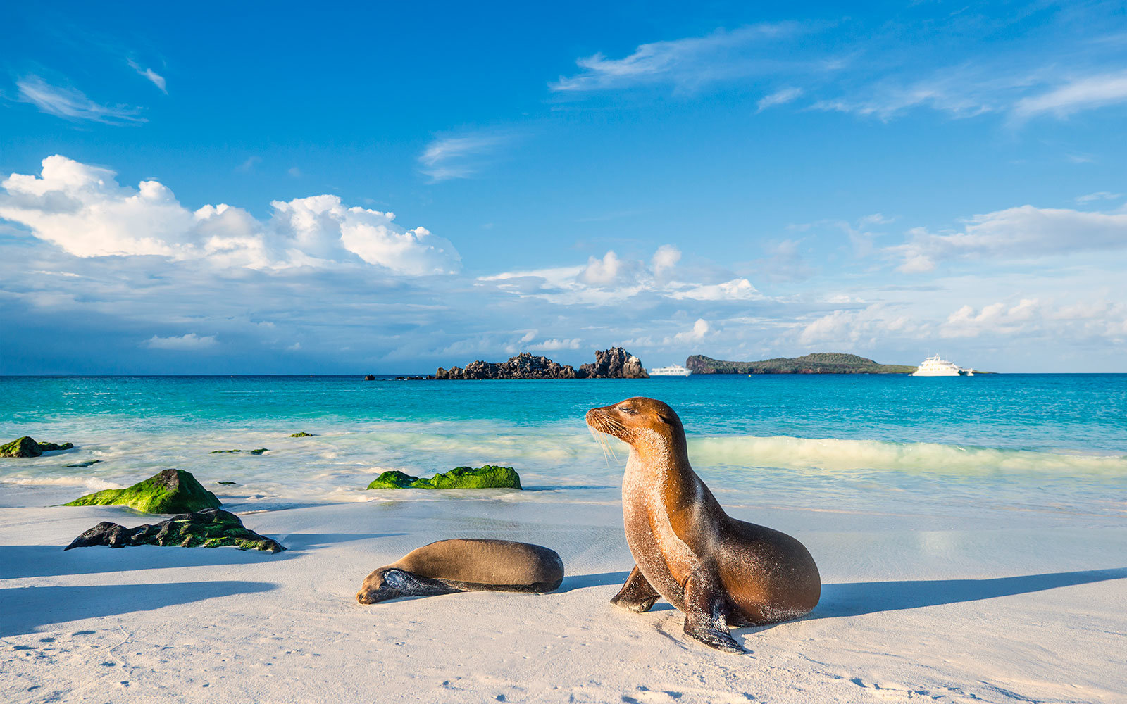 Sea Lions, The Galapagos, Ecuador