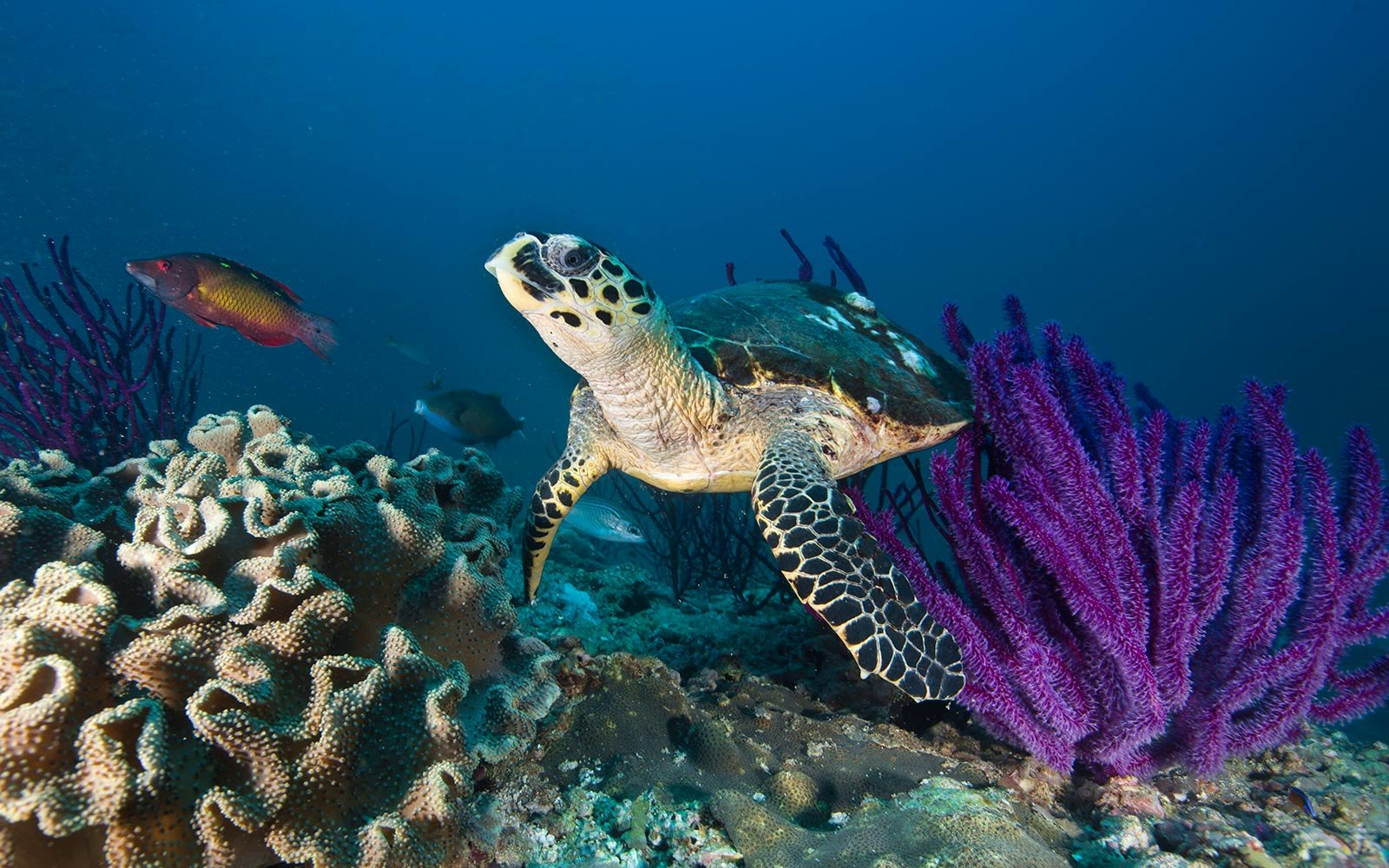 Coral Reef in Oman