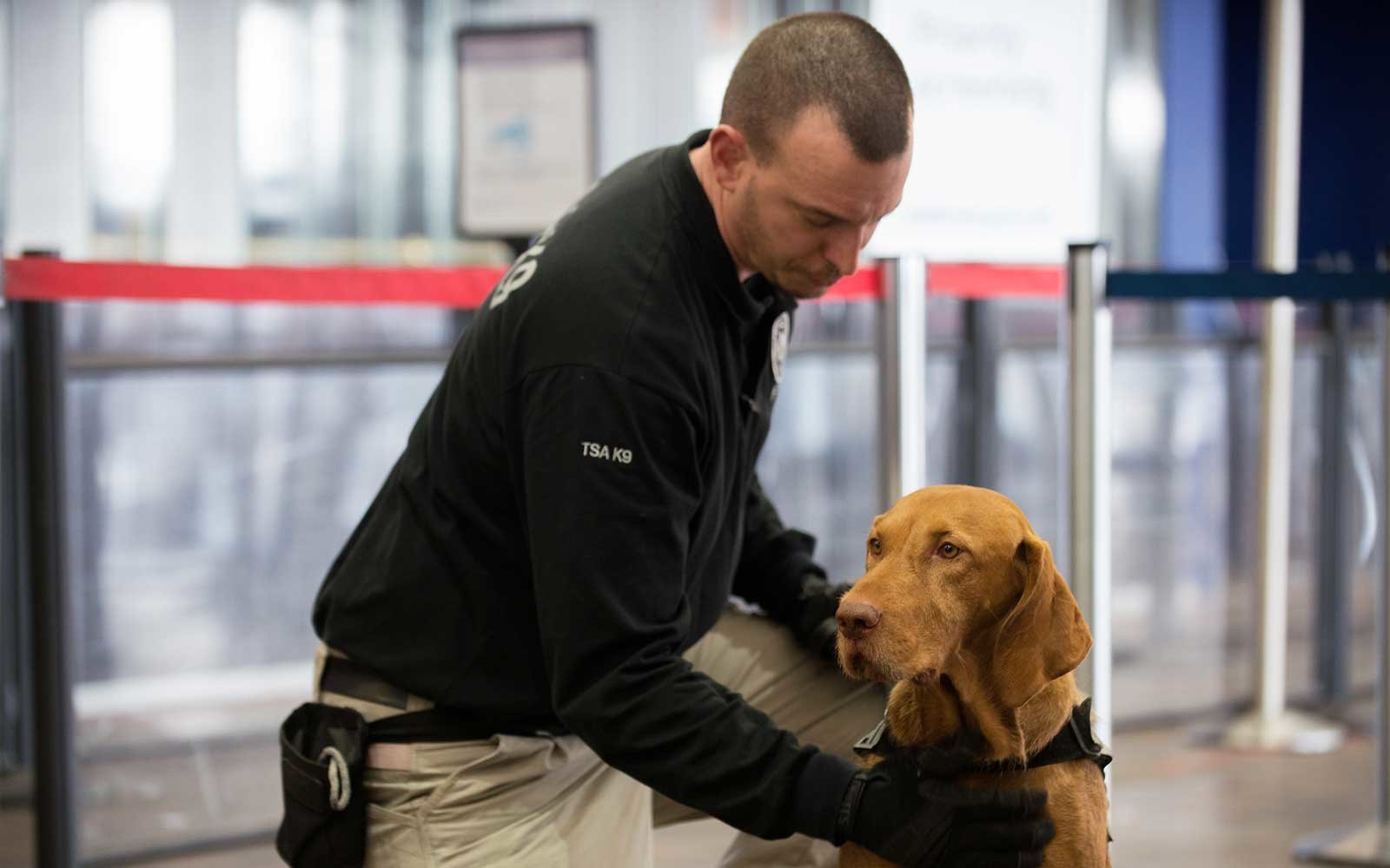 TSA Agents Hold Demonstration With Explosives Detection Dogs
