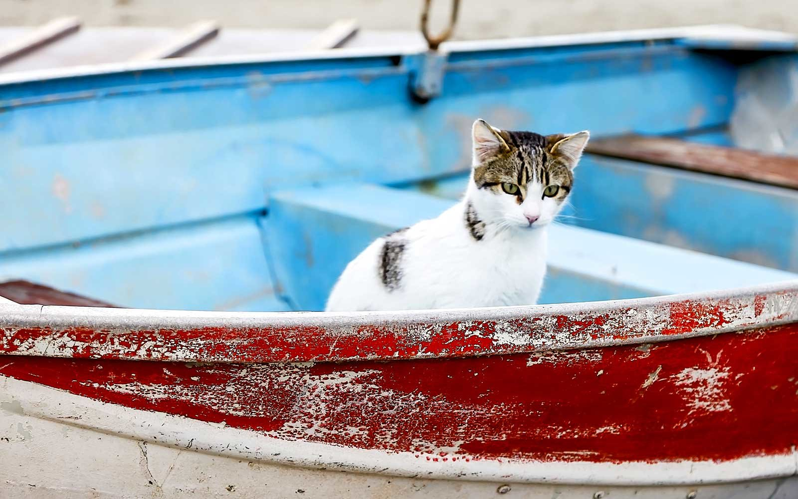 Cat in a boat on the island of Syros Greece