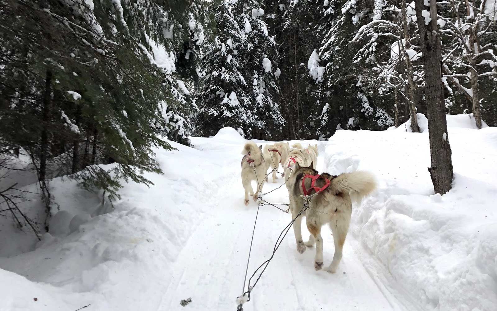 Dogsledding in Quebec, Canada