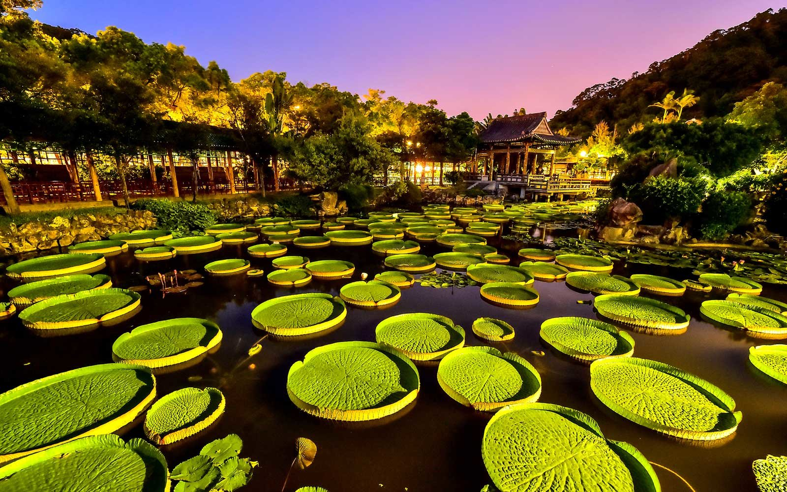 You Can Actually Sit on Giant Lily Pads in This Taipei Park
