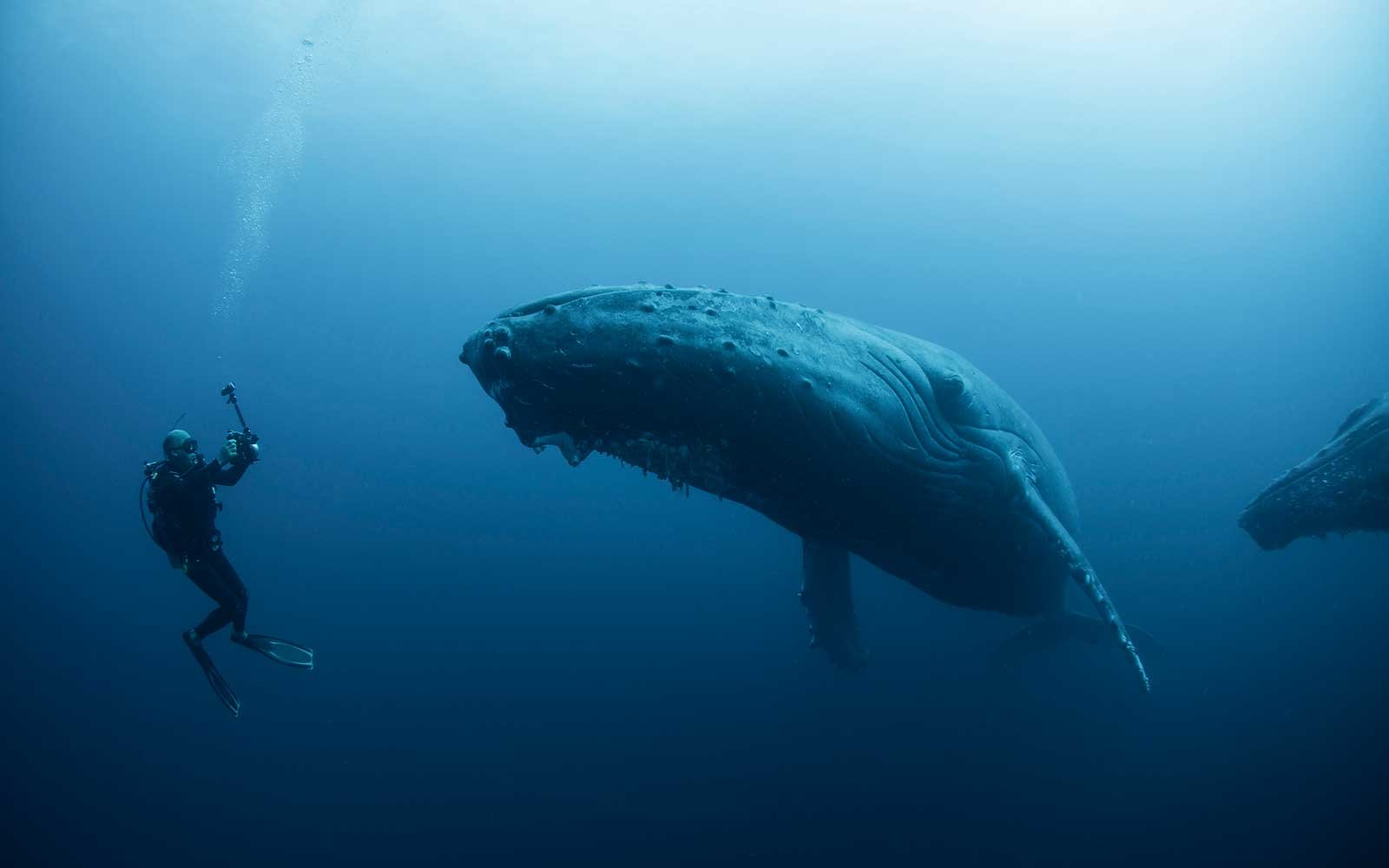 This Diver Got An Epic Selfie With An Enormous Humpback
