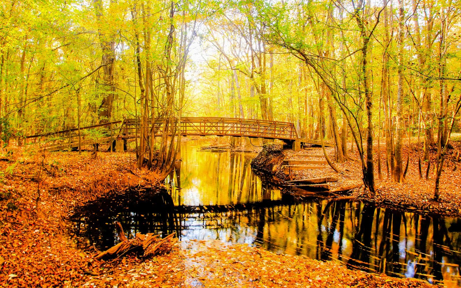 Congaree National Park: South Carolina