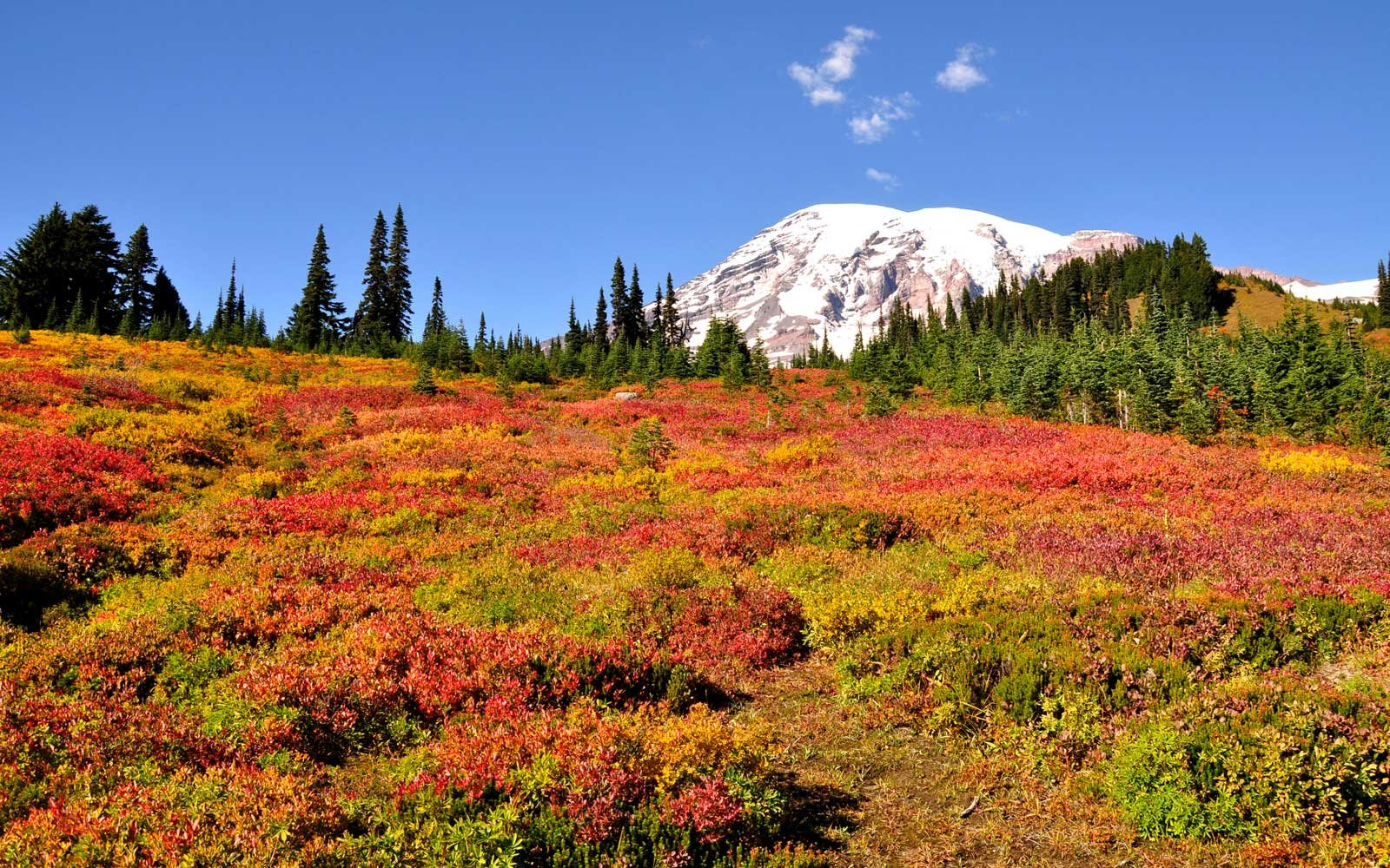 Mount Rainier National Park in fall