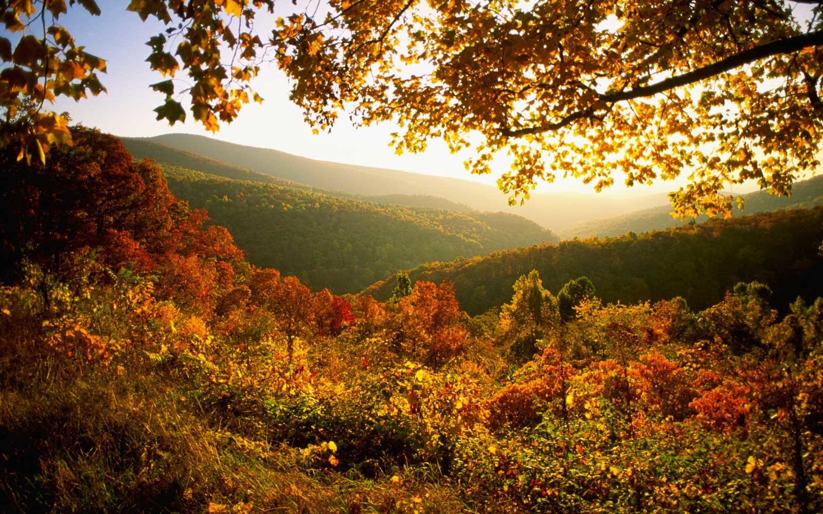 Autumn in Shenandoah National Park, Virginia, USA