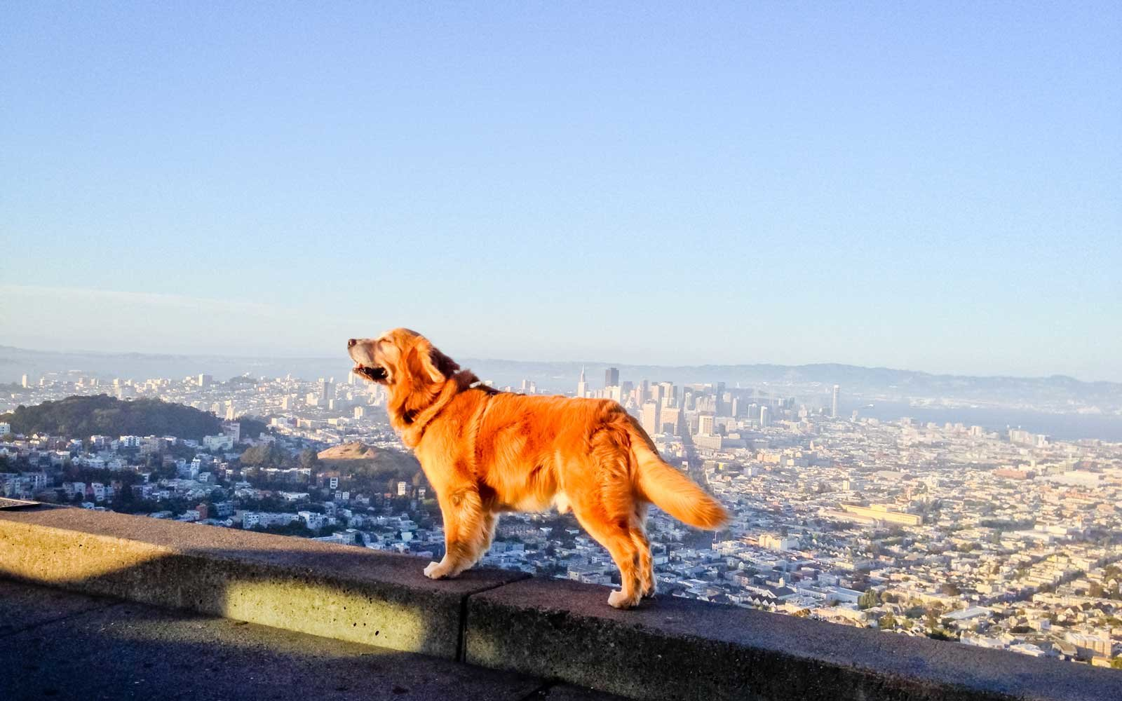 All about dogs: a selection of sites