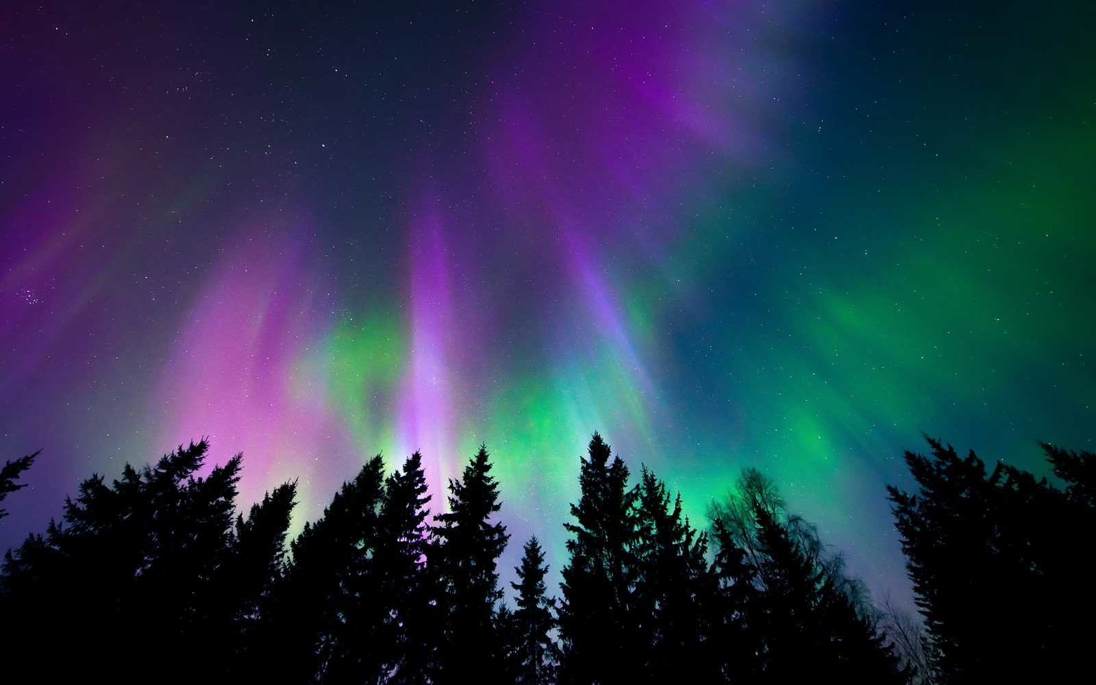 Colorful Northern lights shining above trees