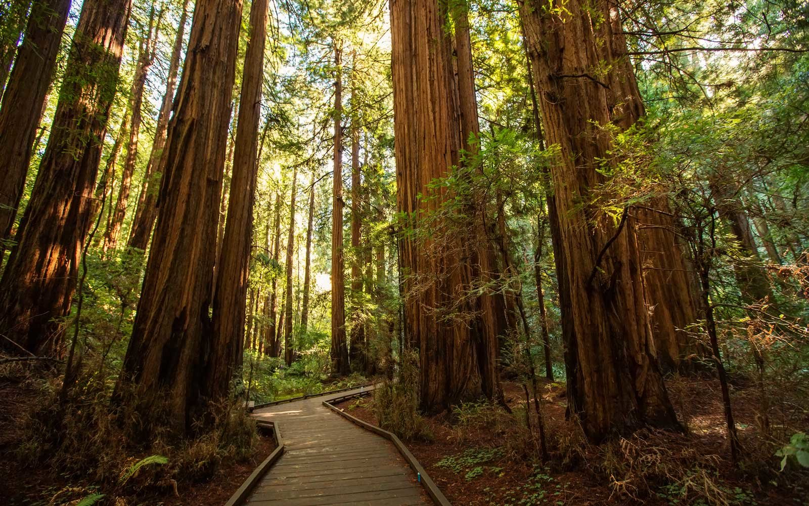 Muir woods National Monument near San Francisco in California, USA