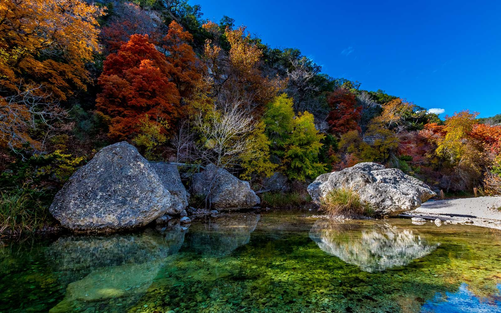 Amazing Fall Colors at Clear Pool in Lost Maples State Park, Texas