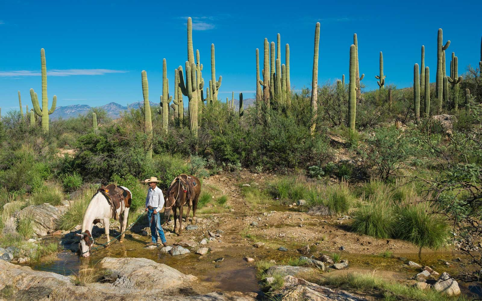 Horse riding at Tanque Verde Ranch in Tucson, Arizona