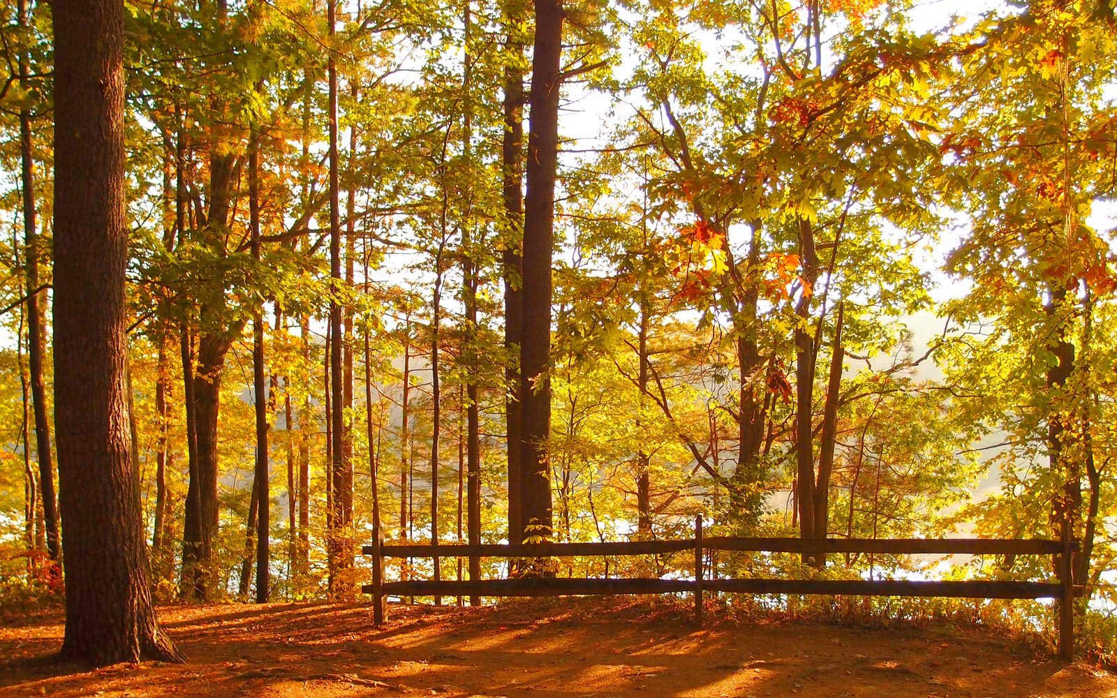 Camping can be a great way to admire colorful fall foliage.