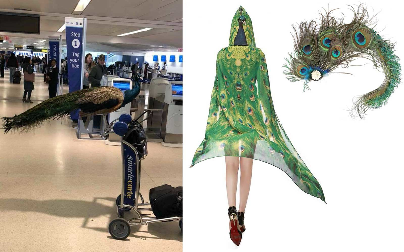 Emotional Support Peacock Costume