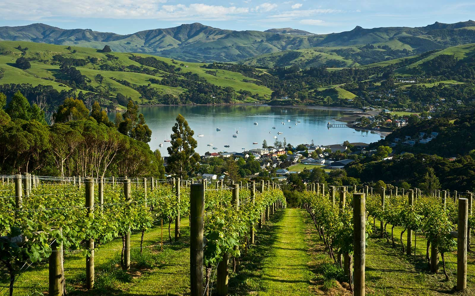 New Zealand, Vineyard, Akaroa, South Island