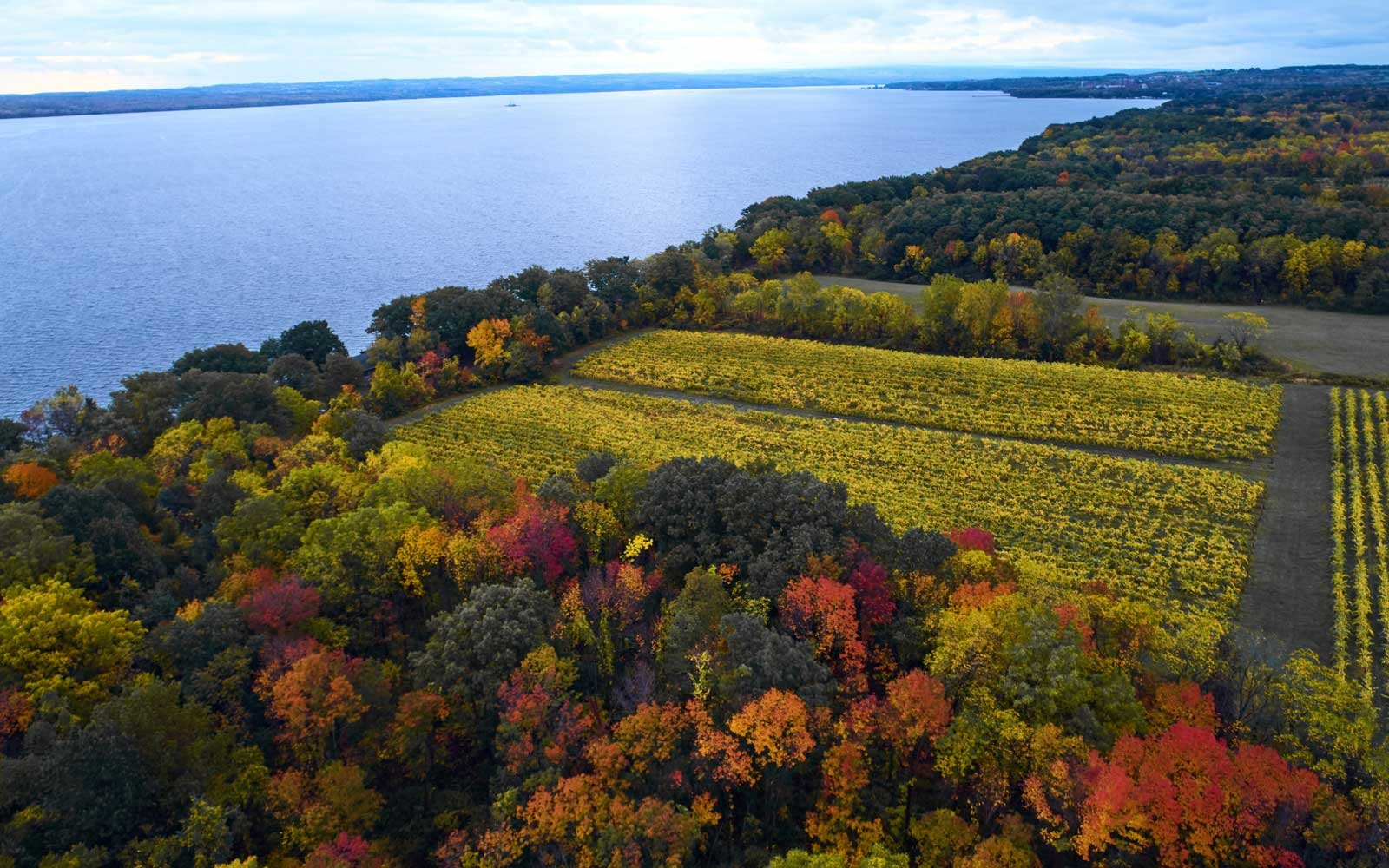 Serenity Vineyards at Seneca Lake, in New York's Finger Lakes region.