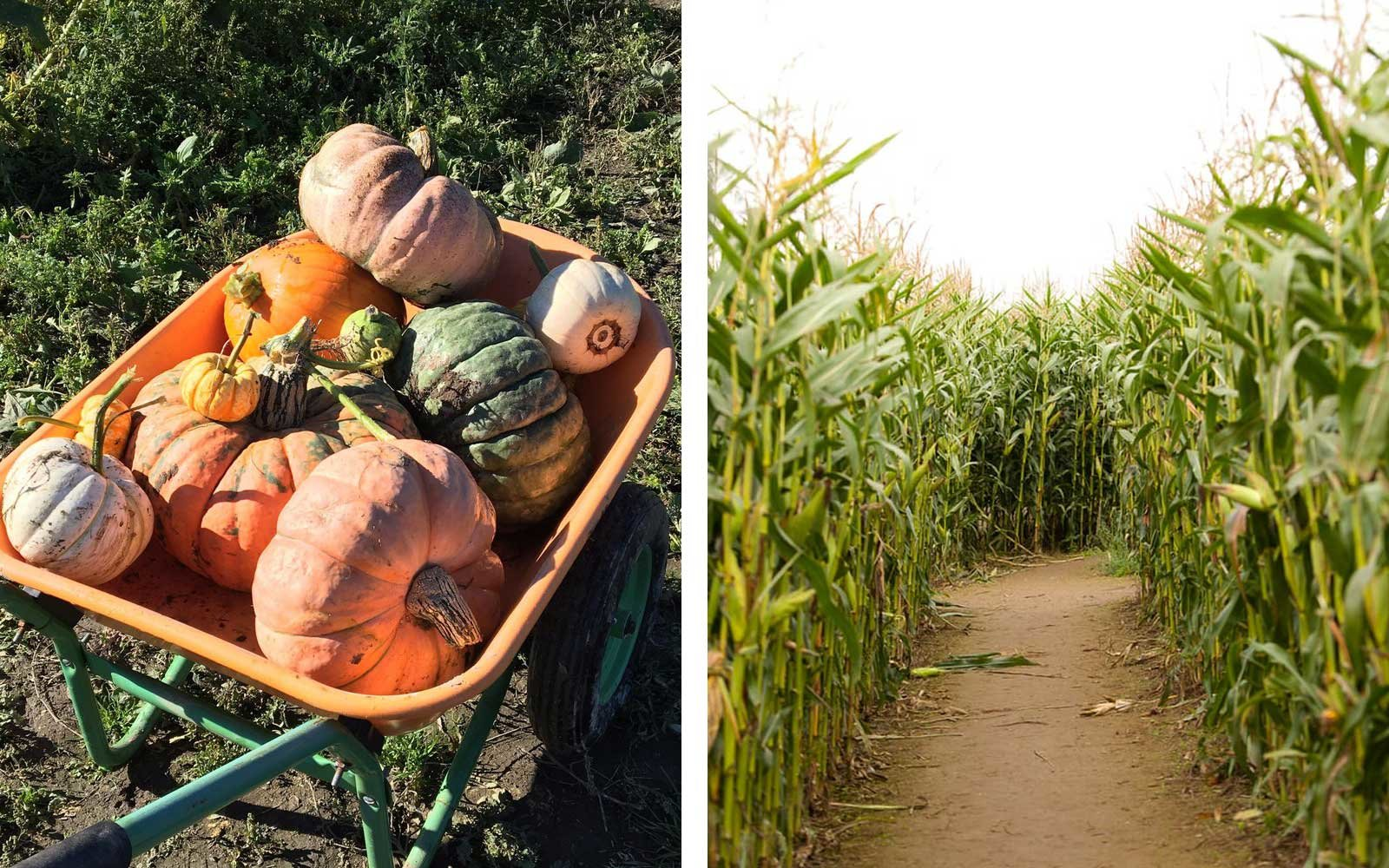 Bob's Corn & Pumpkin Farm, Washington