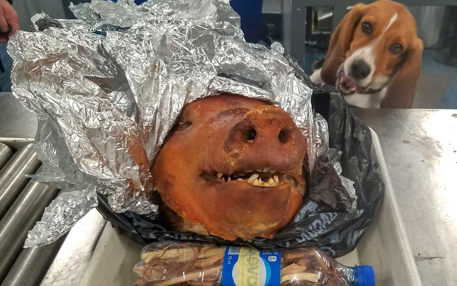 Cooked pig found by CBP dog, Hardy at Atlanta Airport