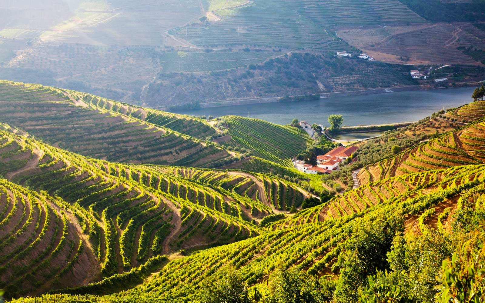 Terraced Vineyards lining the hills of the Duoro Valley, Portugal