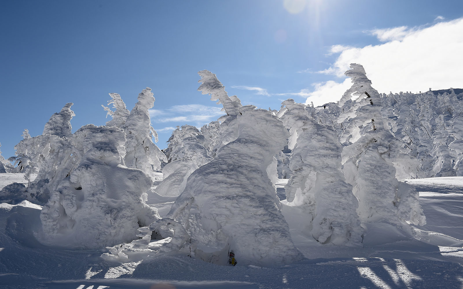 Close-up of snow monsters in Zao, Japan