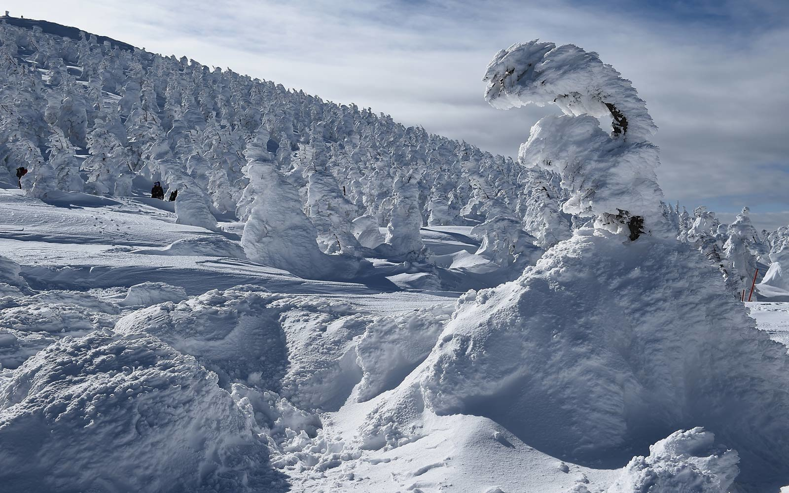 Snow monsters landscape in Japan
