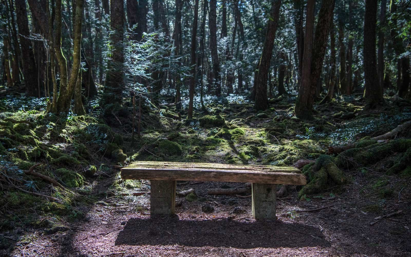 Light falls on a moss-covered bench in Aokigahara forest in Fujikawaguchiko, Japan.