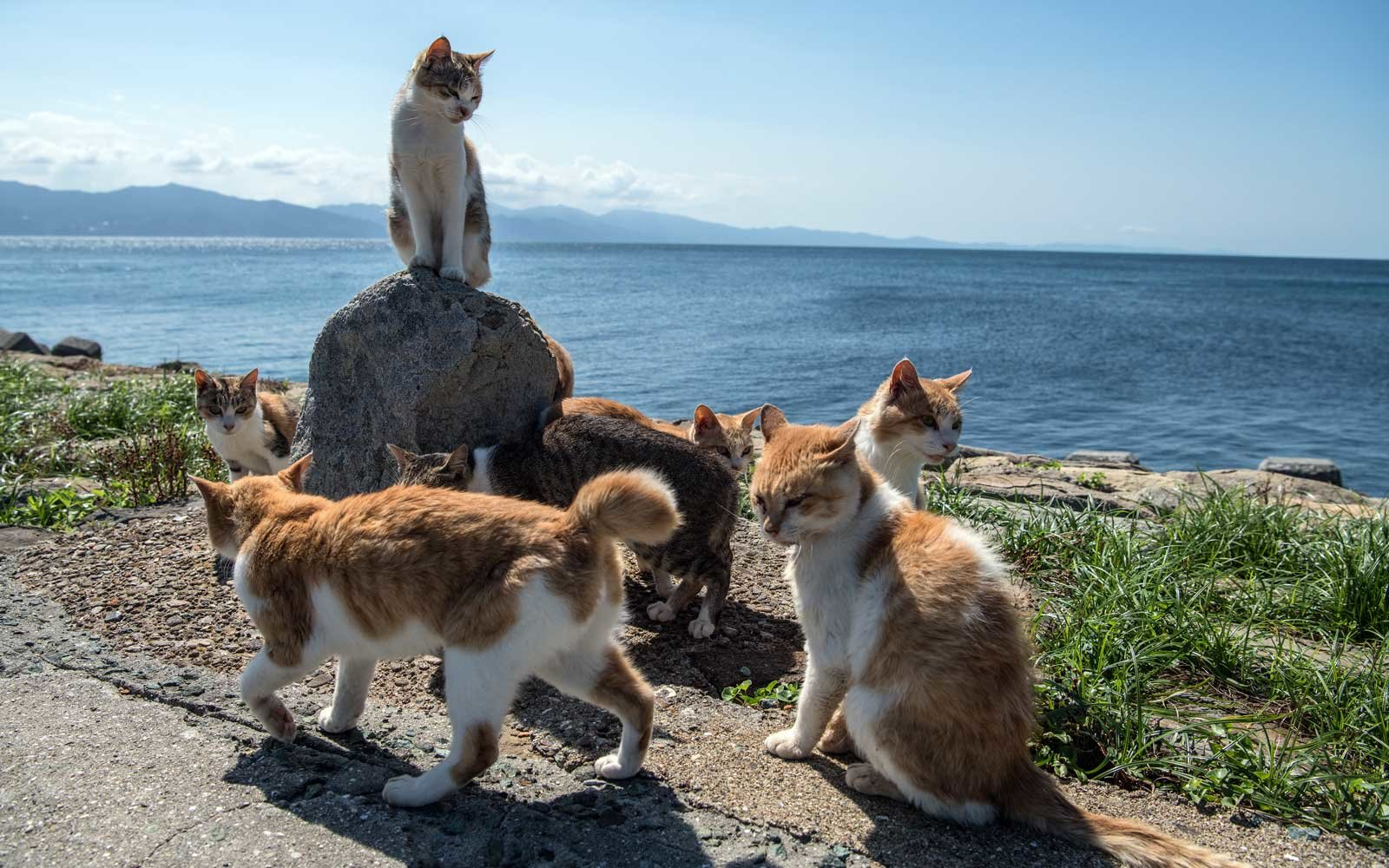 Cats relax in the sun in Aoshima, Japan.