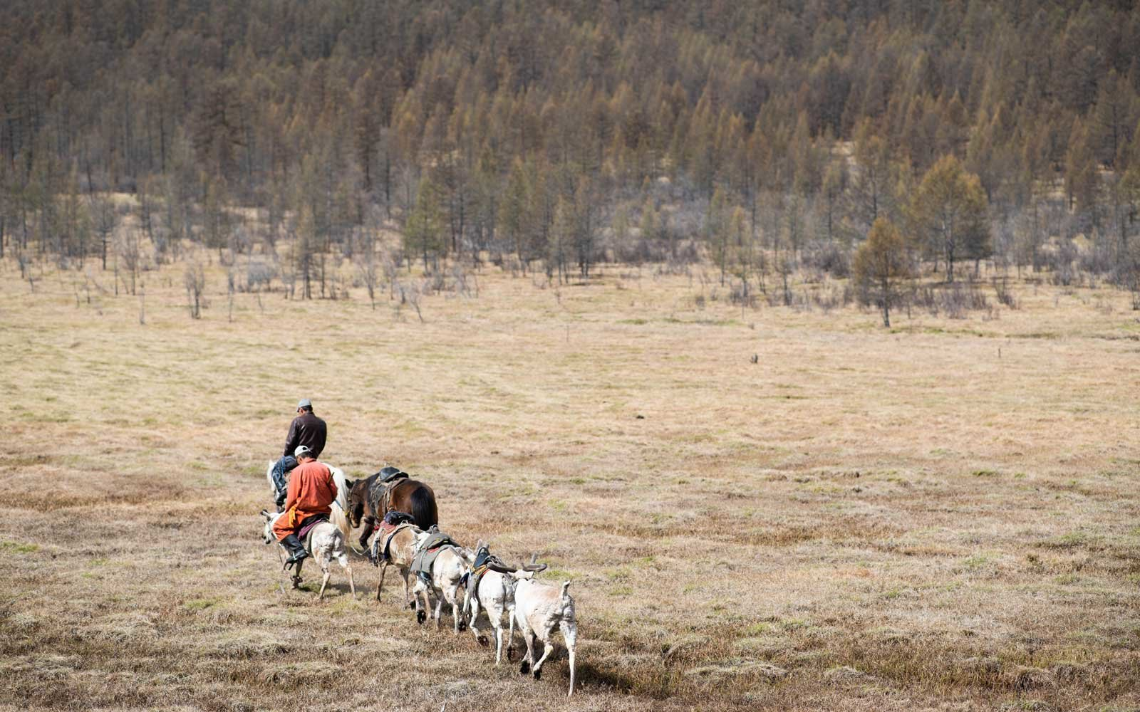 Learn how to herd reindeer during your stay.
