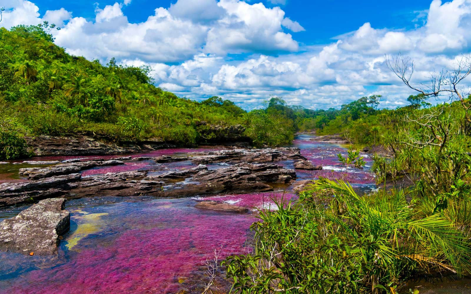 Cano Cristales, the Rainbow River, in Colombia